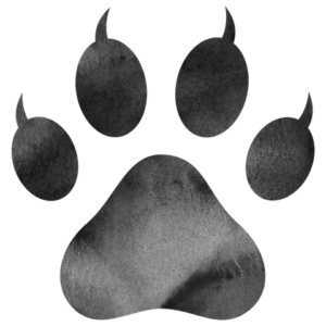 Cat logo for siamese cat care and information
